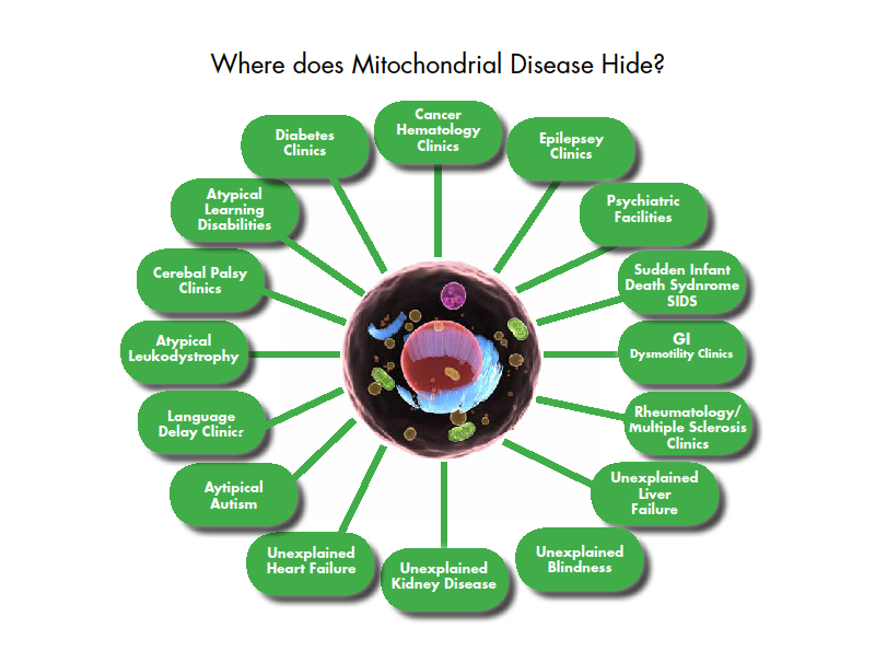 where-is-mito-disease-diagram